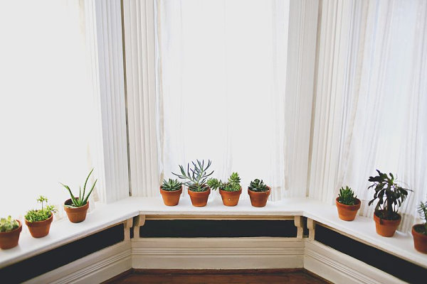 Indoor plants decorate a bay window