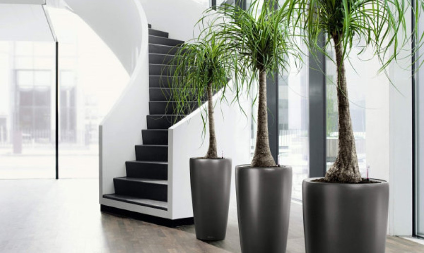 inspiration tropical house plant care.  20 Unforgettable Indoor Plant Displays Ideas