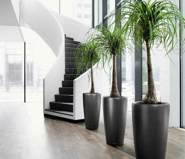 Indoor tropical potted plants