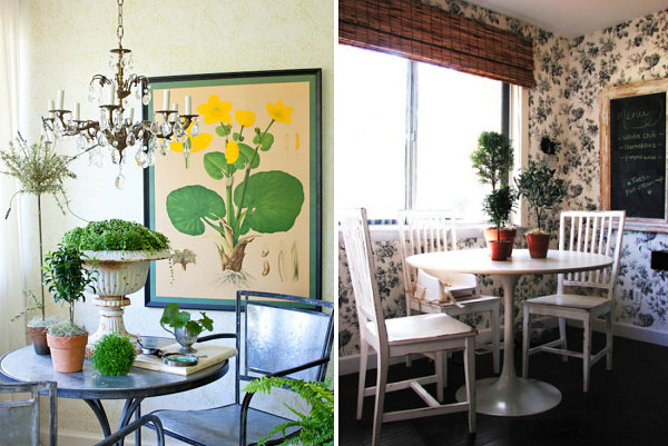 Plant collections on indoor tables
