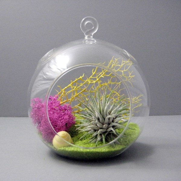 create an unforgettable air plant terrarium. Black Bedroom Furniture Sets. Home Design Ideas