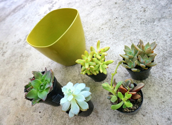 Succulents and a lime green planter