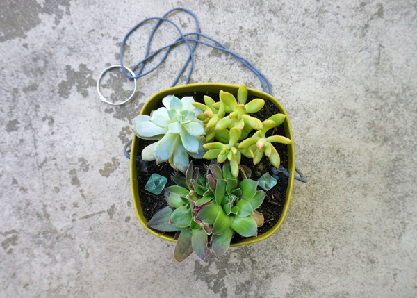 Succulents fill this DIY planter