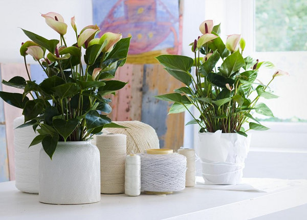 Tropical plants in white pots