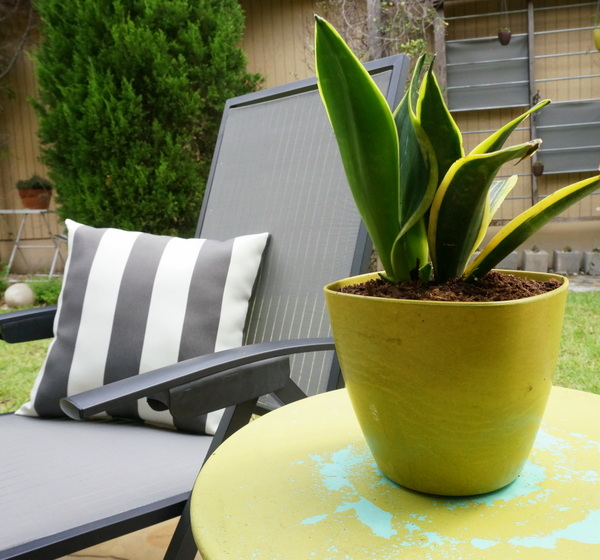 Olive green outdoor lounge table with planter