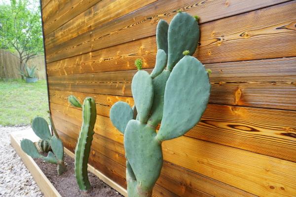 Cacti and custom siding