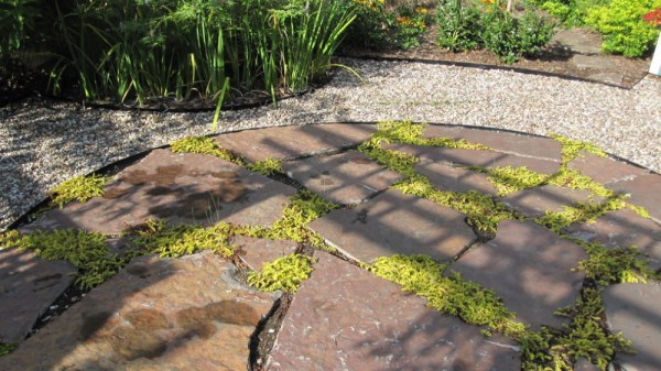Creeping Jenny fills in the spaces between stones