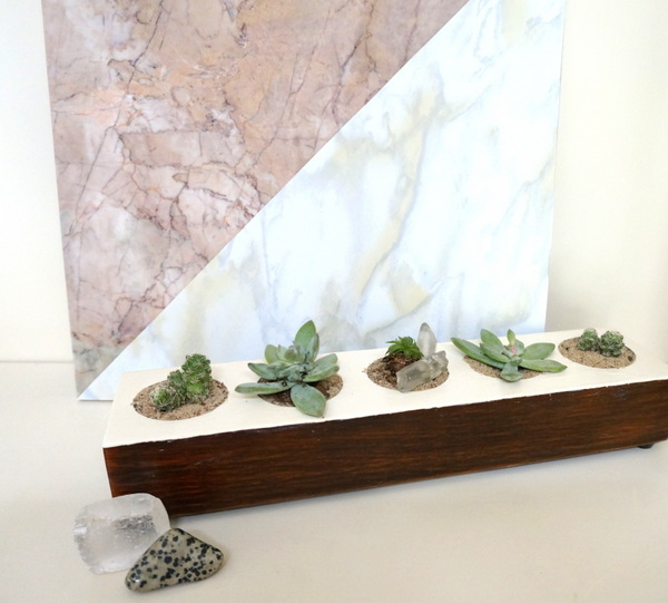 DIY succulent project