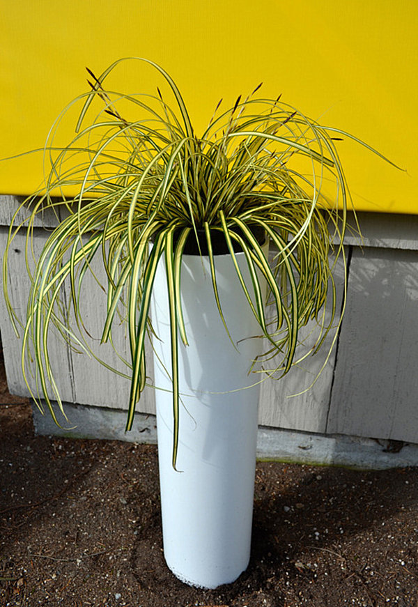 Concrete Pipe Plant : Refresh your space with a diy plant stand or planter
