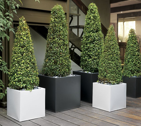 Galvanized metal planters from CB2