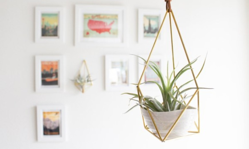 Air Plant Care Tips To Help Your Greenery Thrive