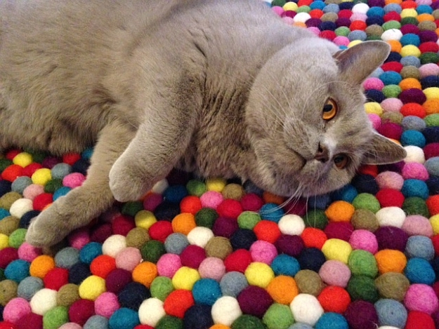 Let your little pet buddy enjoy the coy felt ball rug!