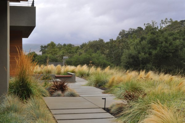 Mexican feather grass is ideal for modern outdoor spaces