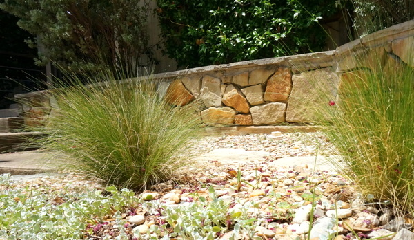 Mexican feather grass thrives in the sun