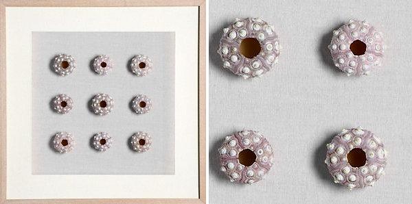 Minimalist sea urchin art
