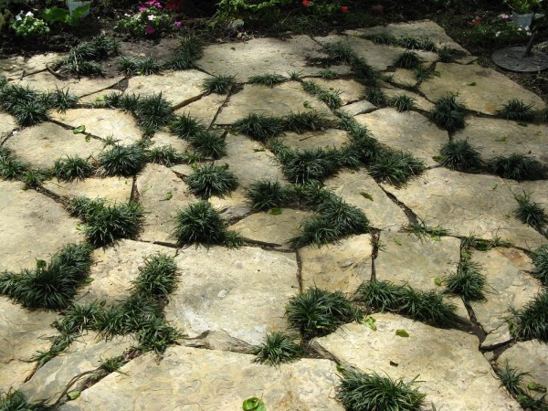 Mondo grass in between stones The Best Outdoor Plants For Shaded Areas