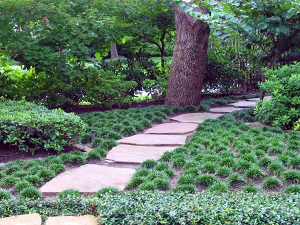 Mondo grass under the trees The Best Outdoor Plants For Shaded Areas