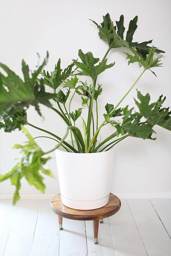 refresh your space with a diy plant stand or planter. Black Bedroom Furniture Sets. Home Design Ideas