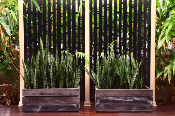 The best outdoor plants for shaded areas for Plante ombre exterieur