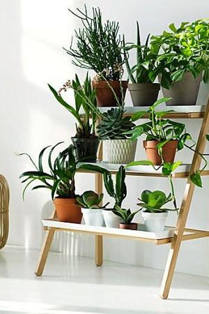 Stepladder plant stand