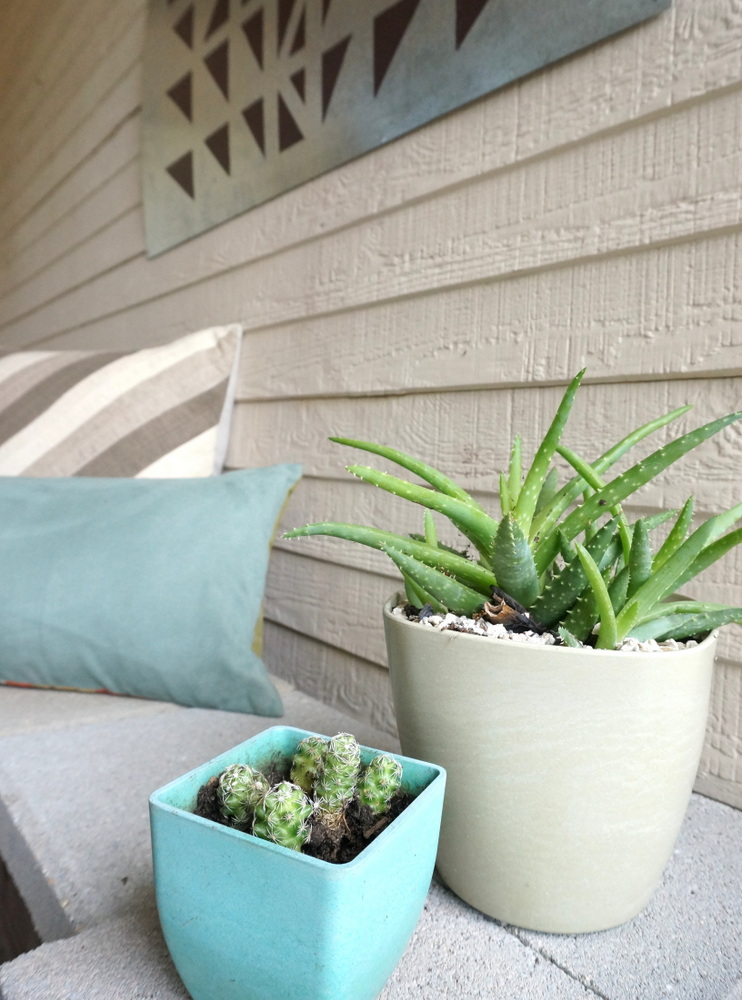 Succulents in clean-lined pots