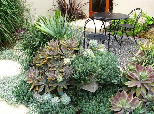Succulents overflowing on a patio
