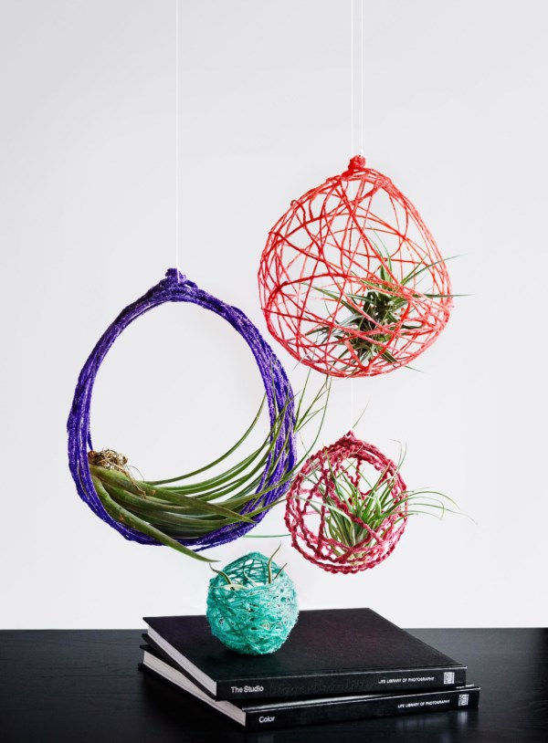 How to display air plants in hanging containers for Air plant holder ideas