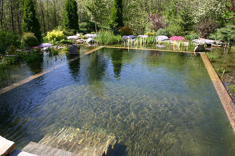 Natural swimming pools design ideas inspirations photos for Swimming pool surrounds design