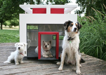 Modern Pet Decor And Supplies For Your Furry Friend