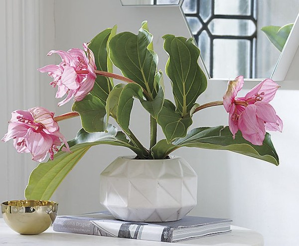 Geometric low vase