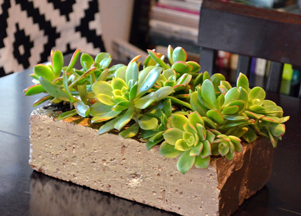 Gold succulent planter