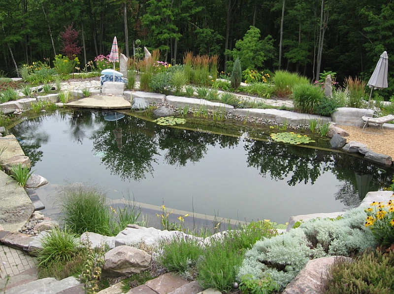 Refreshing natural pool that replicates a pond in the forest