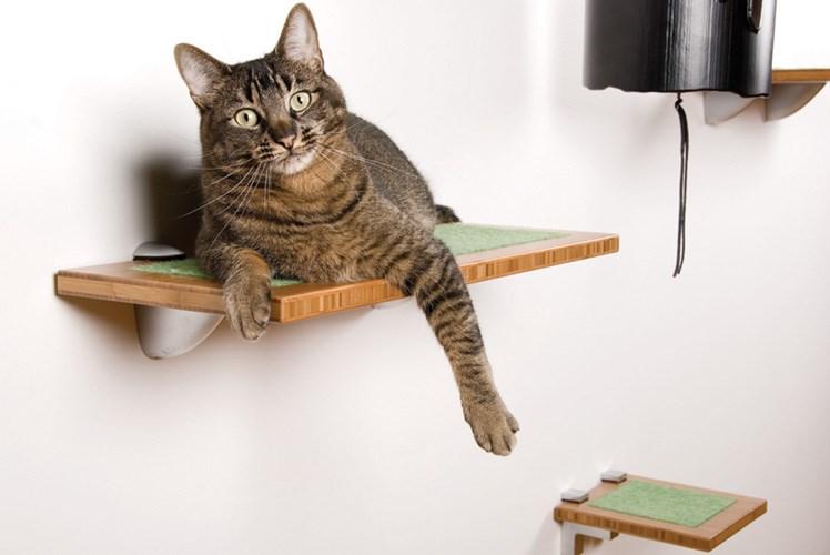 Stylish cat perch