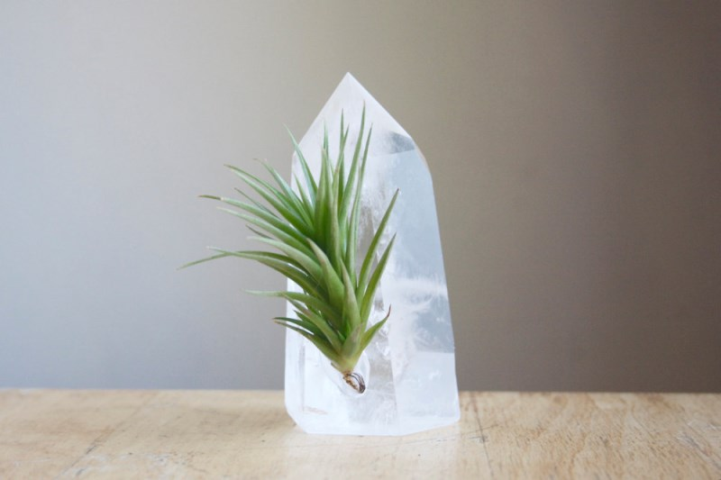 Air plant on a large quartz crystal from Etsy shop Falcon and Finch