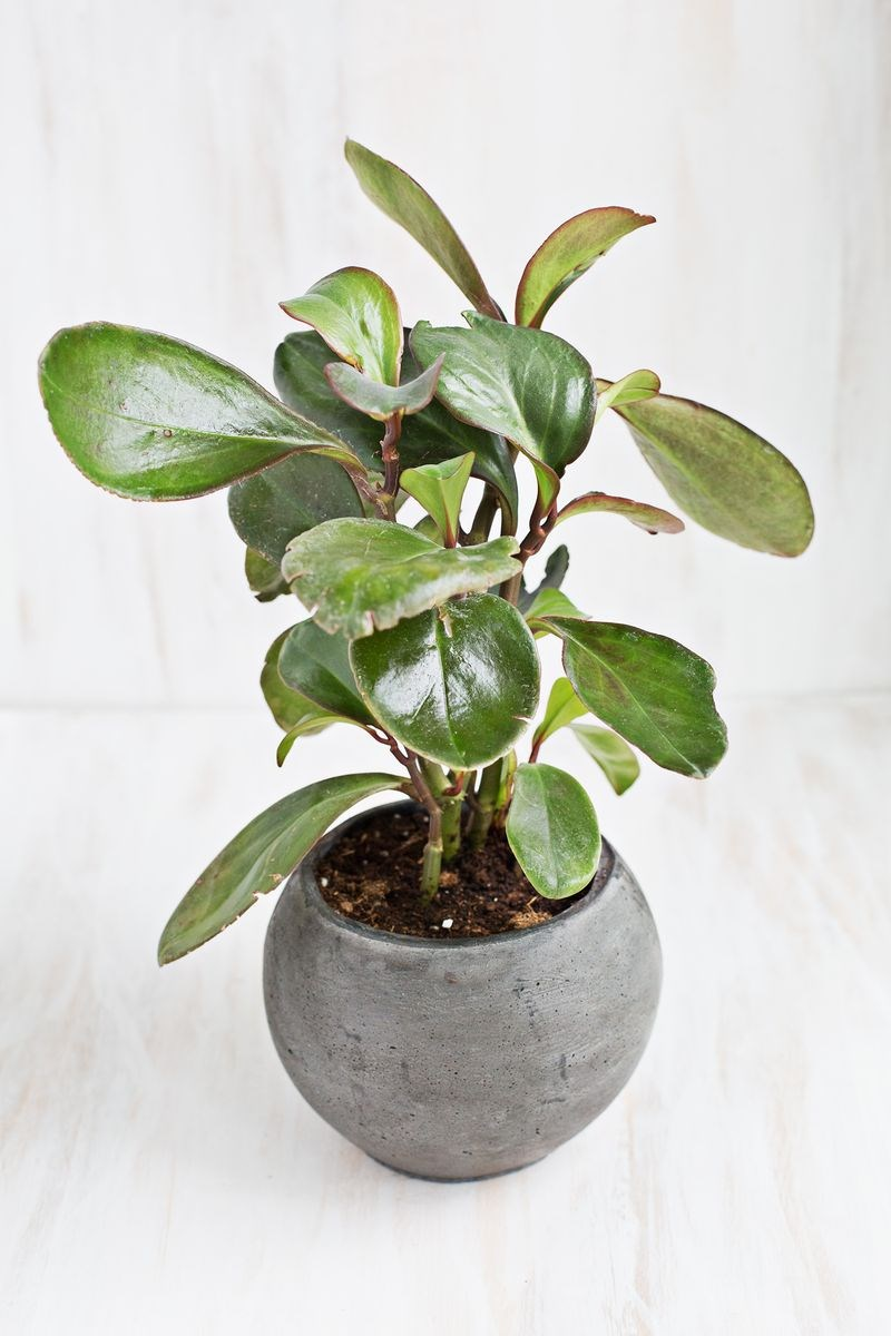 6 stylish houseplants that are safe for cats and dogs Houseplants not toxic to cats