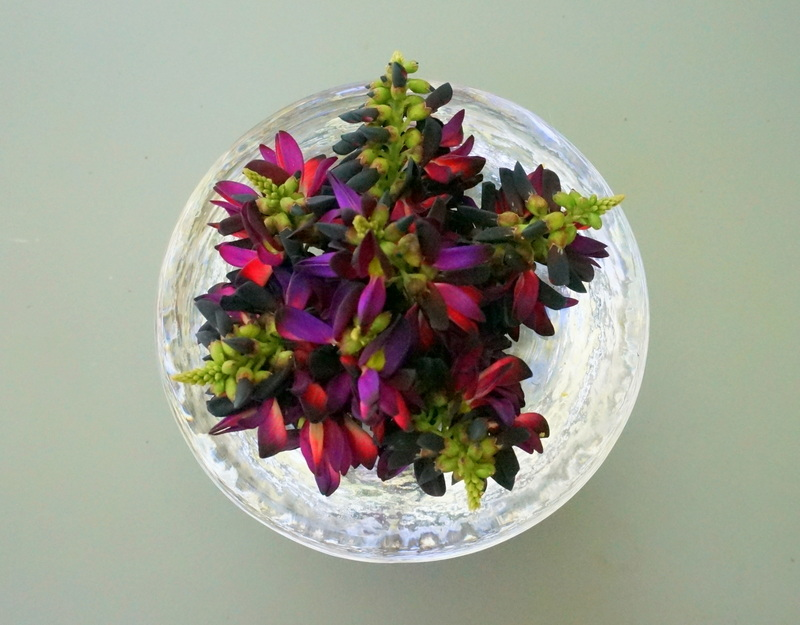 Bowl of violet blossoms