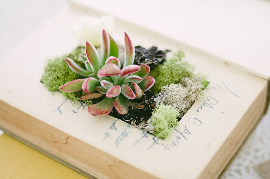 DIY Book Planter is a fun home project