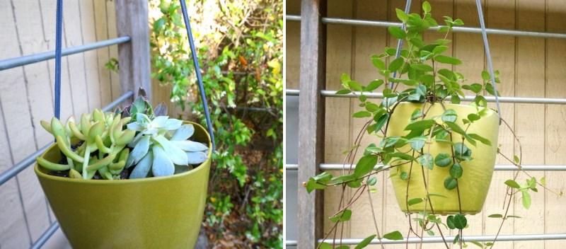 Evolving plant life in a DIY planter