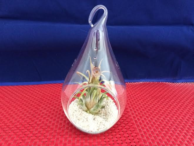 Glass raindrop air plant terrarium from Etsy shop Succulent Oasis