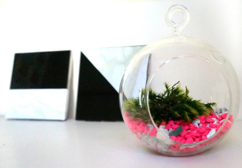 Glass terrarium with moss and rocks