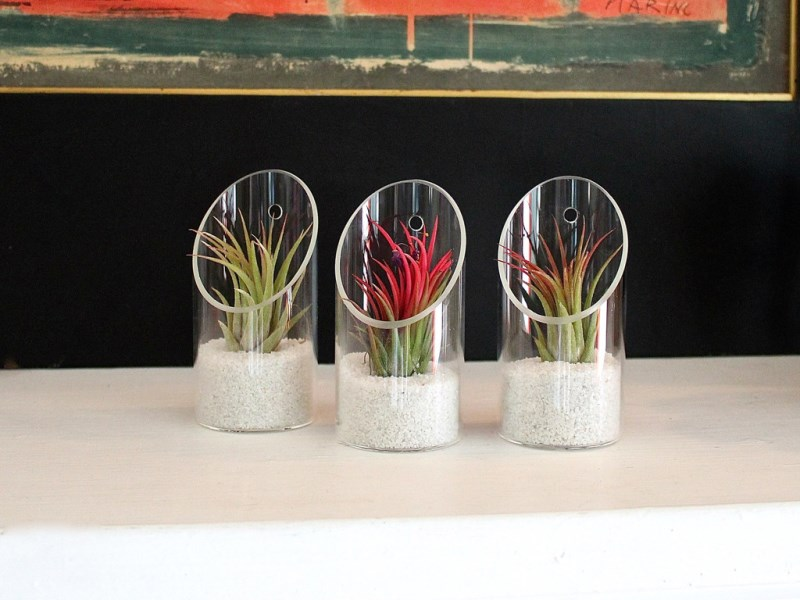 Ionantha air plant kit from Air Plant Design Studio