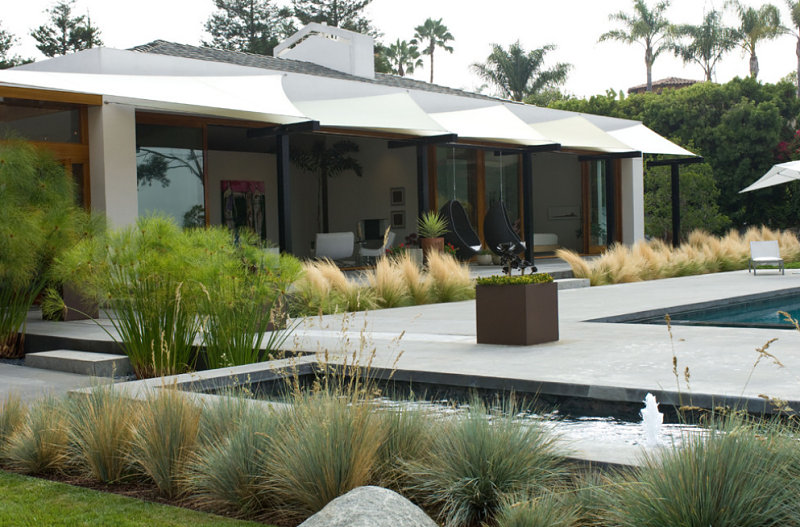Modern backyard landscaping with native grasses