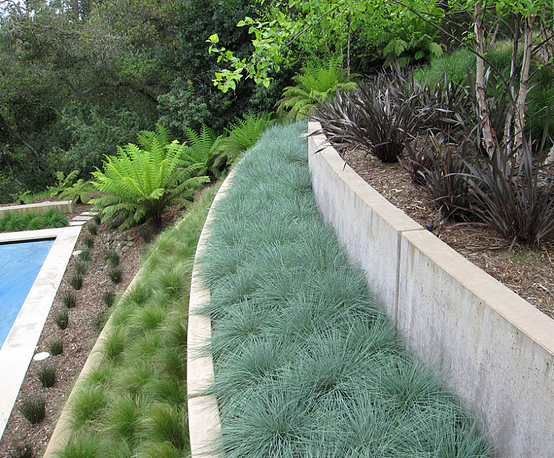 Native grasses in a terraced garden