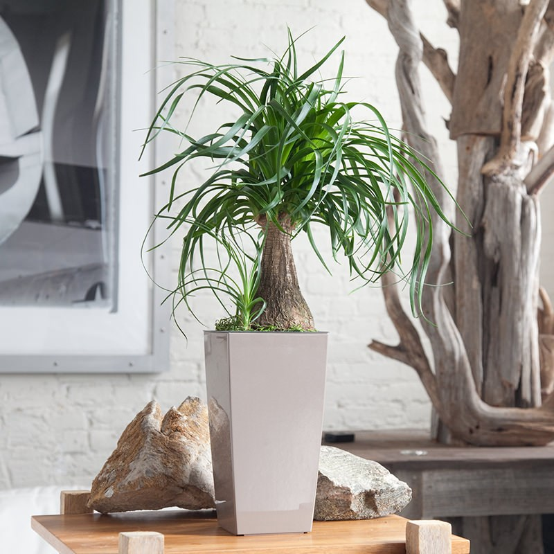 Tall House Plants Low Light 6 stylish houseplants that are safe for cats and dogs