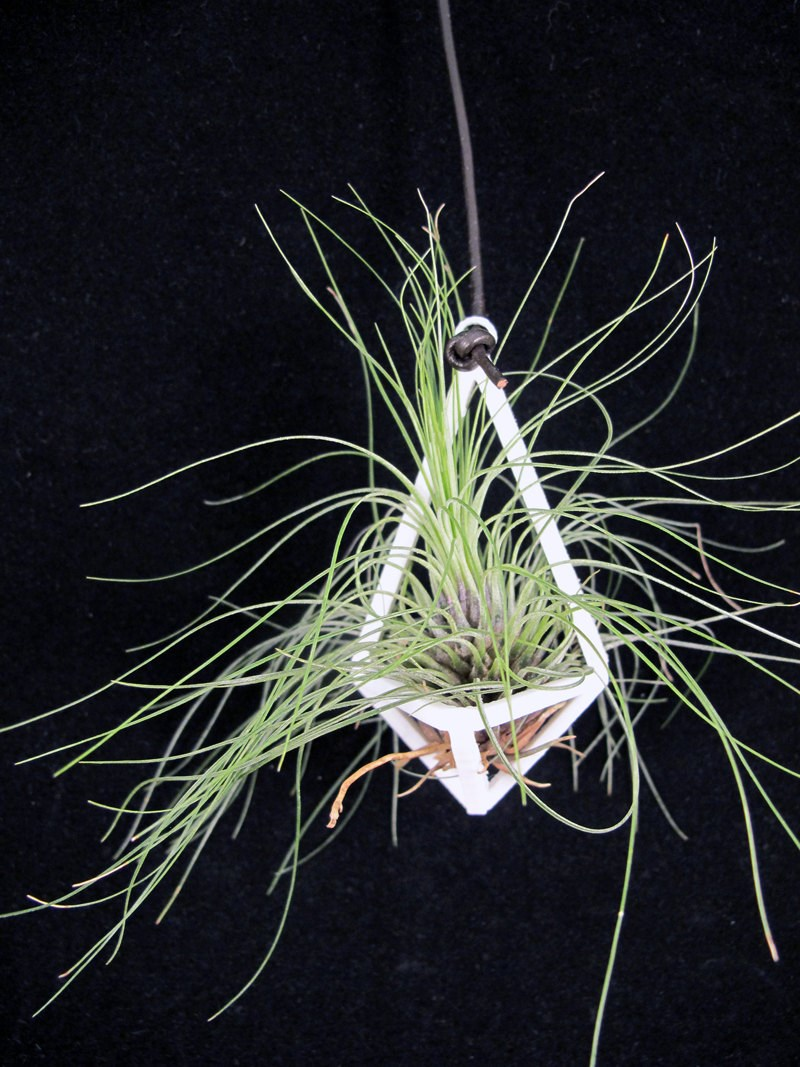 Prism-style air plant planter from Etsy shop Rumple.co