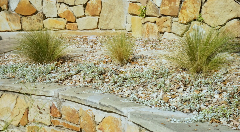 Silver falls dichondra and Mexican feather grass