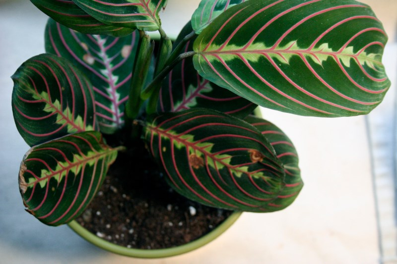 6 Stylish Houseplants That Are Safe For Cats And Dogs on safe indoor plants for cats, safe outdoor plants for cats, safe herbs for cats, safe vines for cats, safe food for cats,