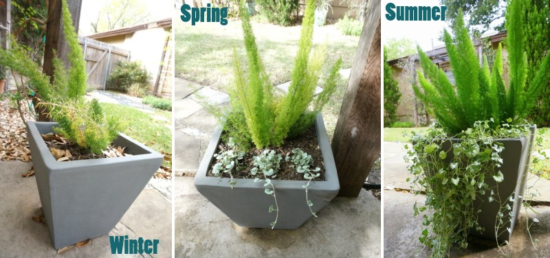 The evolution of a planter