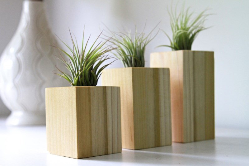 Wood block air plant holders from Etsy shop Gems of the Soil