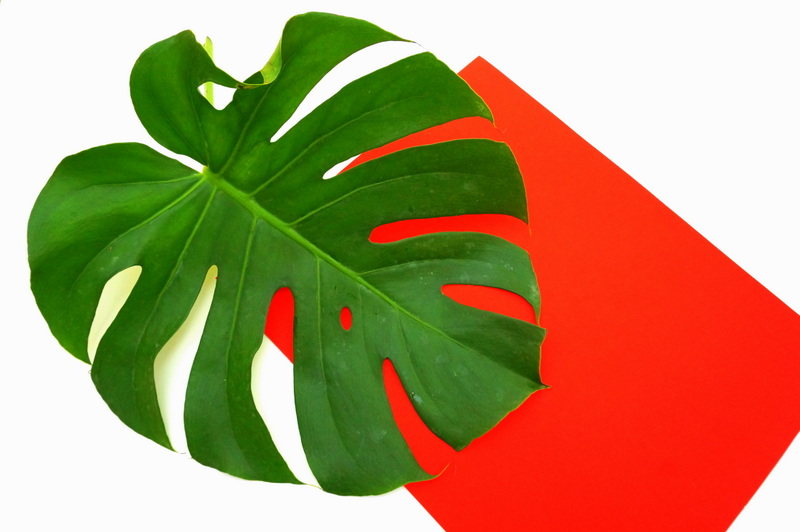A monstera leaf makes the perfect filler for this vase